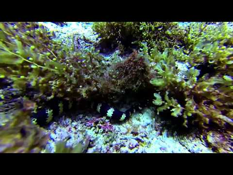 Seeschlangen, Snake Island, Snake Island,Panglao,Philippinen