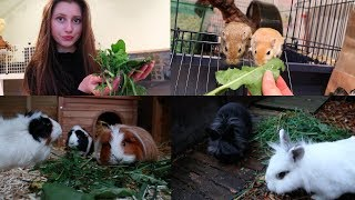 Foraging For My Pets (in November!)