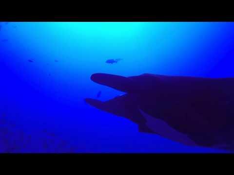 Nautilus Explorer 2013 - Haie & Mantas vor Roca Partida, Revillagigedos / Roca Partida,Mexiko