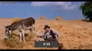 Узнай время потрогав осла за яйца ))) смотреть до конца !