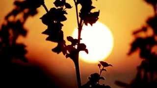 Grassskirt - Pleasant Dream (Café del Mar Dreams 7)