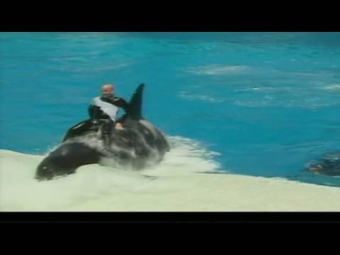 SeaWorld releases video of 2006 killer whale attack - CNN - Video