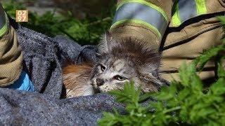 Brandweer redt ternauwernood natte poes