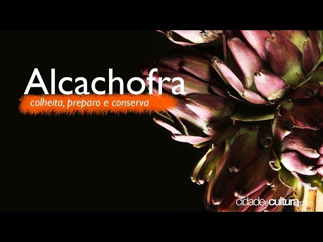 Alcachofra - São Roque