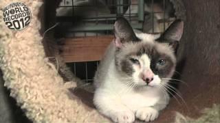 Физз, самая низкорослая кошка в мире