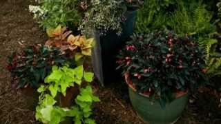 Torch Light Container - Burpee Garden Projects