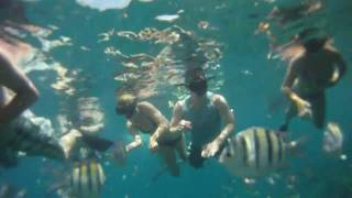 preview picture of video 'Dominican Republic Snorkeling 2010'