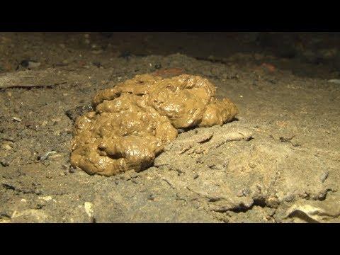 Сюжет ТСН24: Жильцы тульского дома годами пытаются выяснить причины сырости в подвале