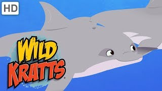 Wild Kratts - Swimming with the Dolphins 🐬   Kids Videos
