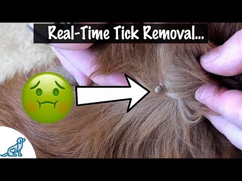 , title : 'How To Take A Tick Off Your Dog - Professional Dog Training Tips