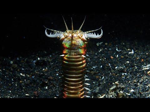 Pinworms méh