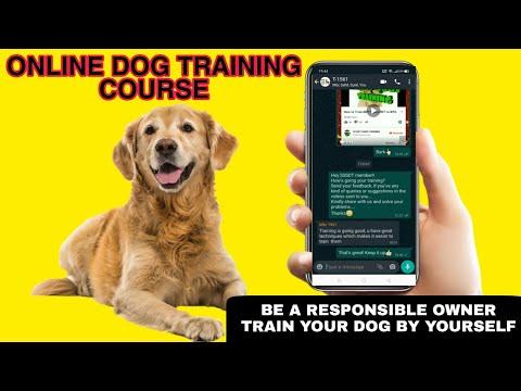 Online Dog Training Course / डॉग ट्रेनिंग अब घर ...