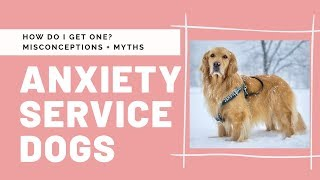 Anxiety Service Dogs