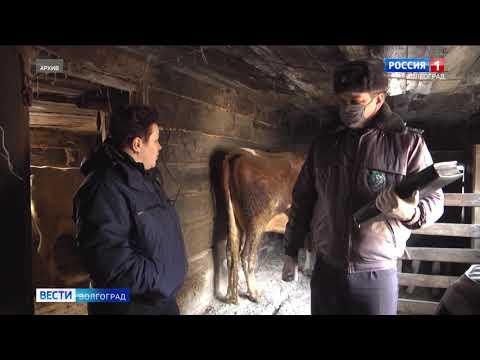 На территории Волгоградской области Управлением Россельхознадзора проведены проверки личных подсобных хозяйств граждан