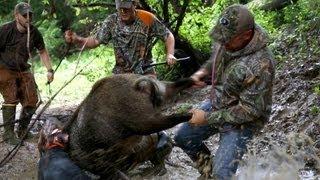 Hog Hunting Part 2 - Mossy Oak