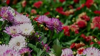 5 Gardening Tips from the Colorado State University Trial Garden (Video)