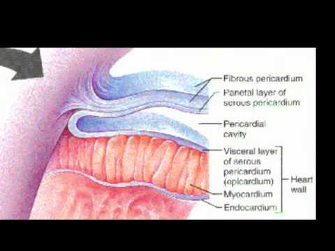 Hozzájárulás az enterobiosishoz