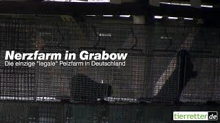 Nerzfarm in Grabow