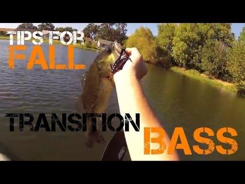 Bass Fishing- Soft Plastics in the Fall