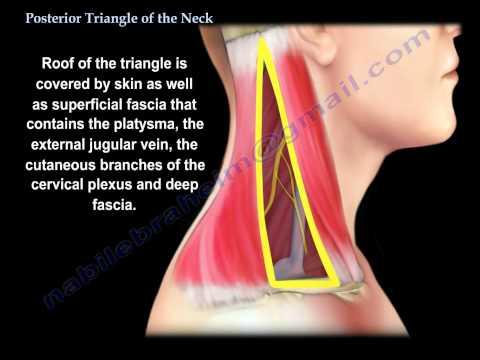 A siroté le muscle sur le cou que traiter