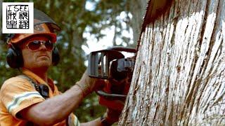 加拿大落基山脉的伐木工