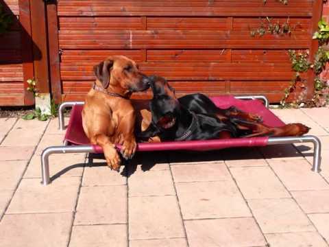 Hundeliege dann Luxushundeliegen