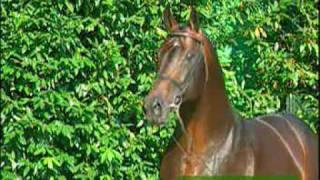 video of Larome