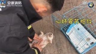 В Китае пожарные спасли десятки животных после пожара