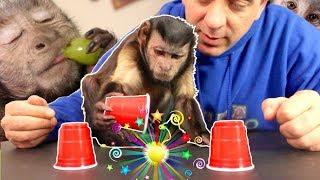 Capuchin Monkey Magic Challenge! (CAN'T BE FOOLED)