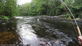 Fly fishing Big salmon in three minutes