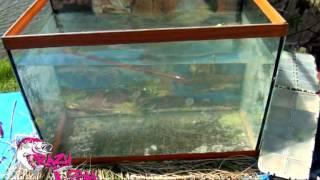 Scalp minnow crazy fish