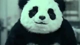 En Égypte, il vaut mieux pas contrarier le Panda (Pub)