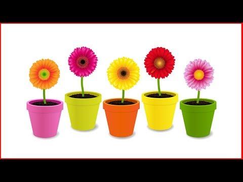 5 Неприхотливых комнатных растений, которые будут цвести до весны