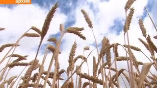 Мобилизовать все силы и средства на уборку урожая-2018