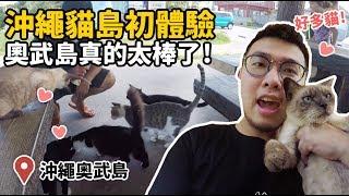 沖繩貓島初體驗,奧武島真的太棒了!【狸貓】