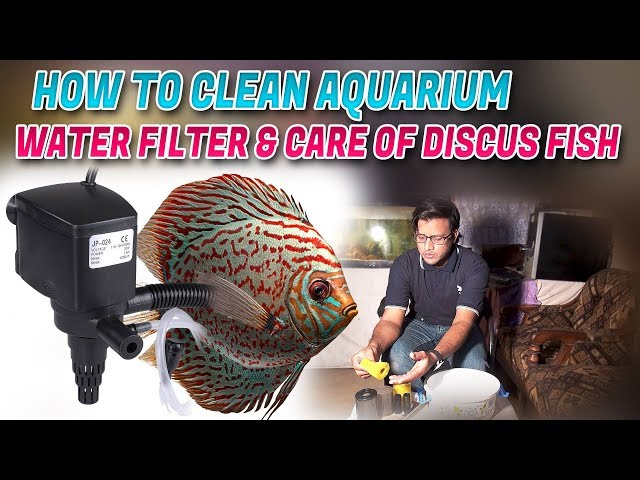 How To Clean Aquarium Water Filter & Care of discus Fish (Jamshed Asmi Informative Channel)