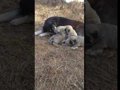 Lilly & pups first time out to play in the sun