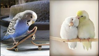Cute Parrots Videos Compilation cute moment of the animals - Soo Cute! #4