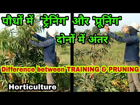 Difference Between TRAINING & PRUNING In Orchard ... - YouTube