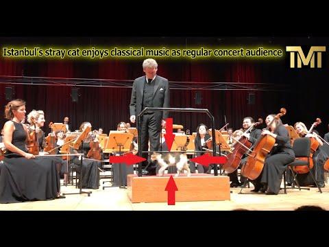 Kat steel kollig by konsert in Istanboel