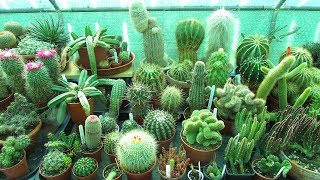 Top 5 Cactus Plants to Grow for Beginners