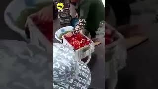 Как в Китае красят фрукты - Видео онлайн
