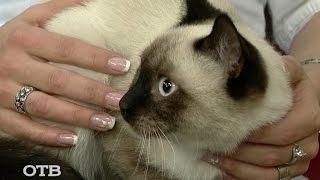 Знакомство с питомцами: кот Жан Поль ищет хозяев