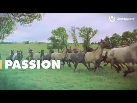 Uruguay Reisen Video Impressionen