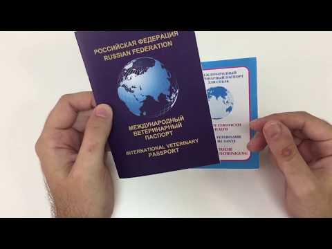 Как заполнить ветеринарный паспорт кошки собаки, образец заполнения