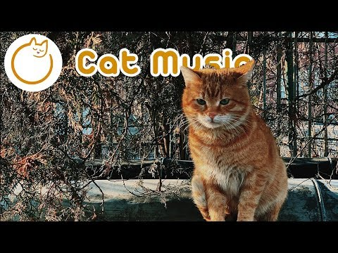 EXTRA-SOOTHING Peaceful Cat Music - Sleep Music for Cats and Kittens!