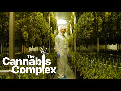 The Cannabis Complex | A short series on Canada's legalization of cannabis