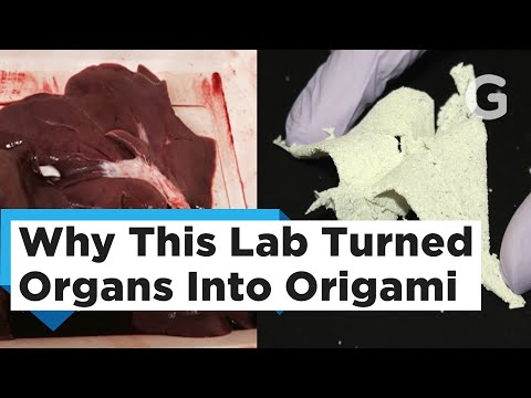 This Isn't A Horror Movie: Scientists Are Turning Organs Into Paper Cranes