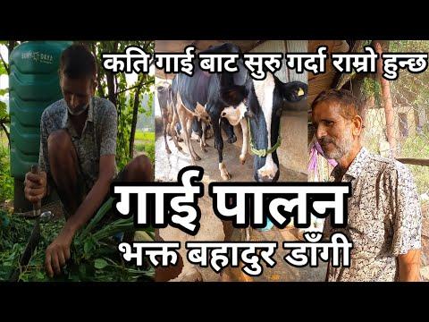 गाई पालन गर्नको लागि धेरै ठूलो लगानी गर्नु पर्दैन, Gai Palan Bhakta Bahadur Dangi Phone 9845307648