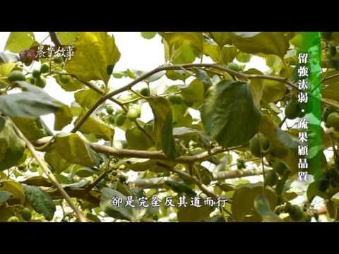 農業故事館-蜜棗